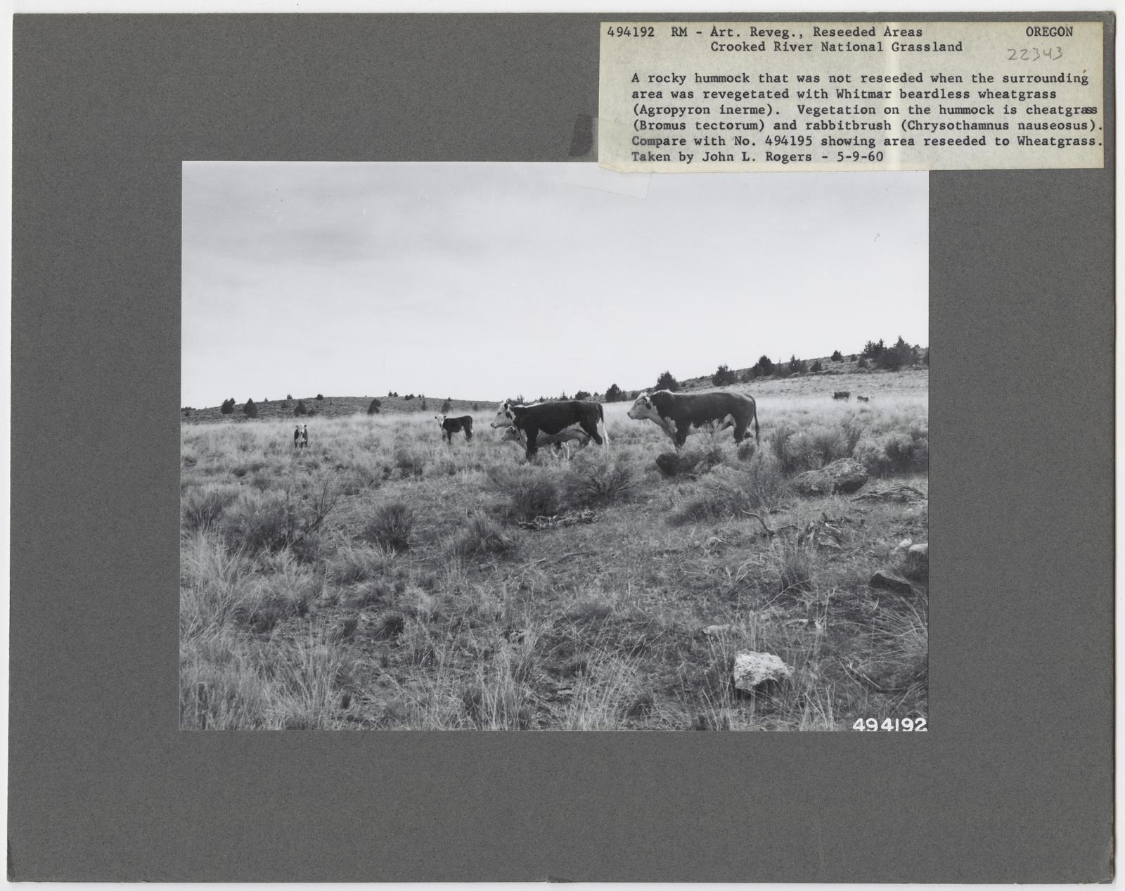 Range Revegetation - Plant Control - Oregon