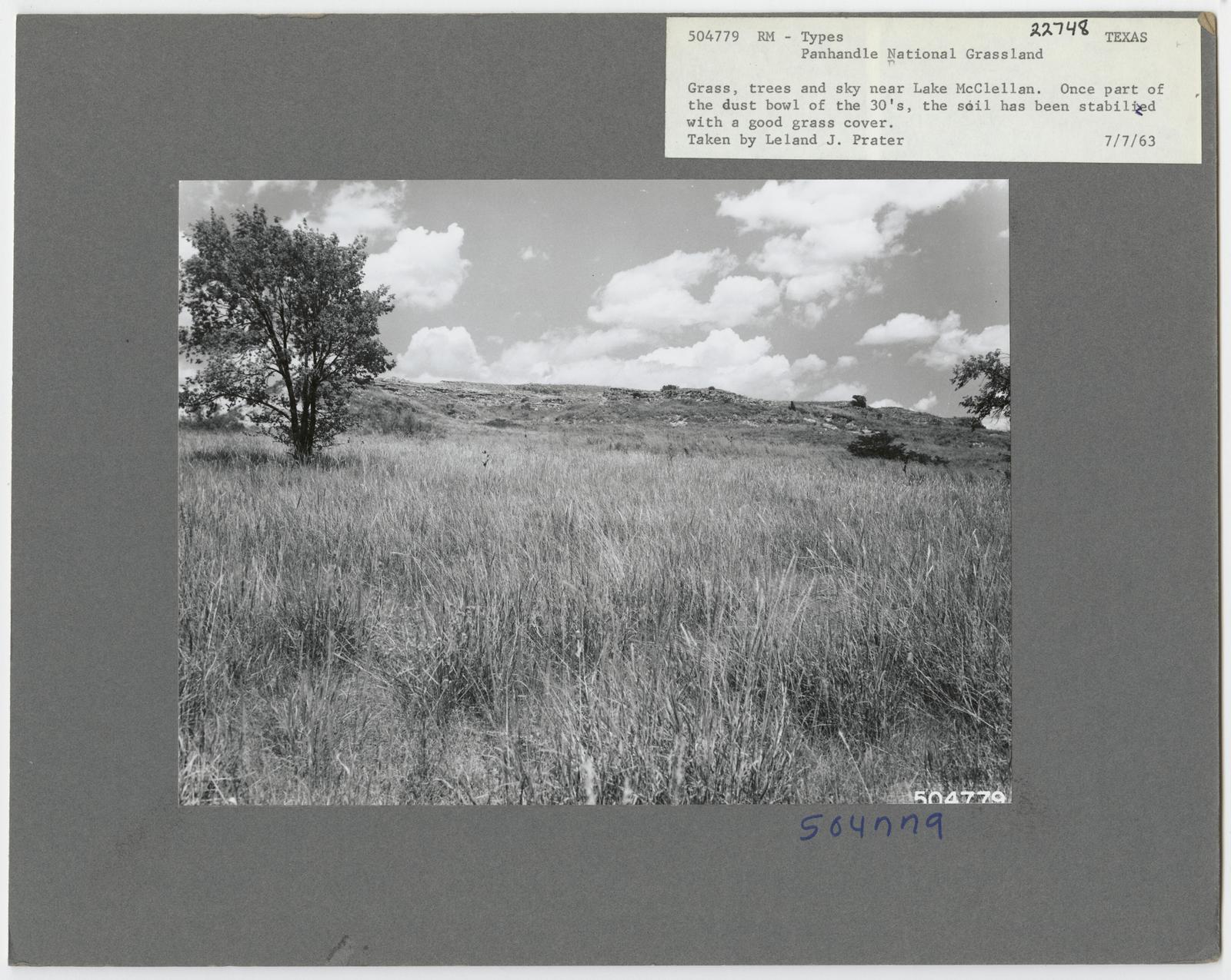 Range Revegetation - Plant Control - Texas