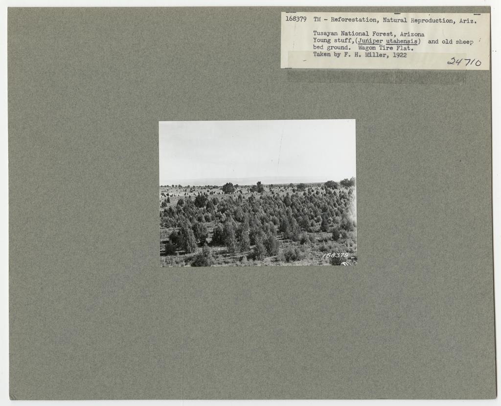 Reforestation - Arizona