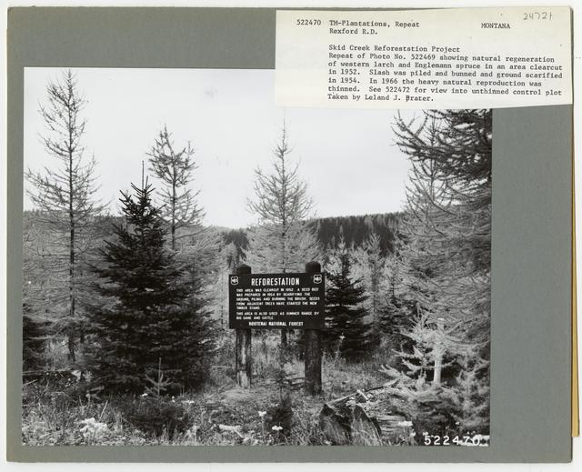 Reforestation: Camera Point - Montana