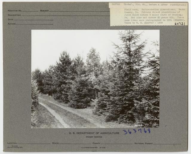 Reforestation: Camera Point - Pennsylvania