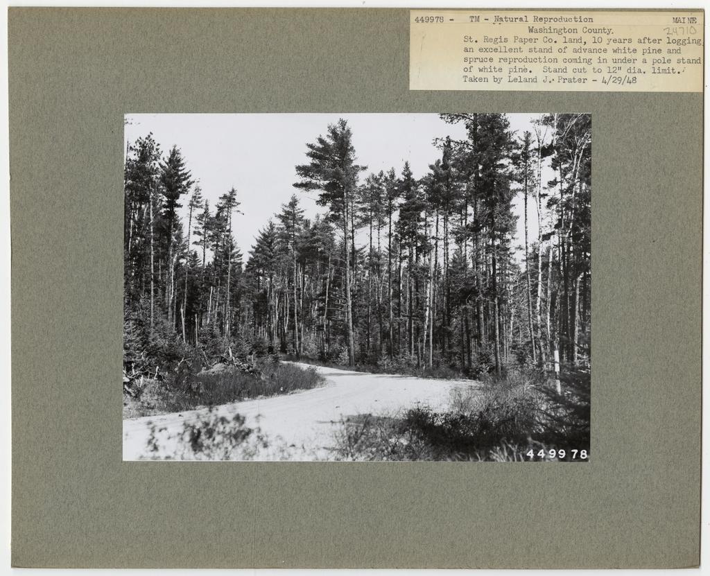 Reforestation - Maine