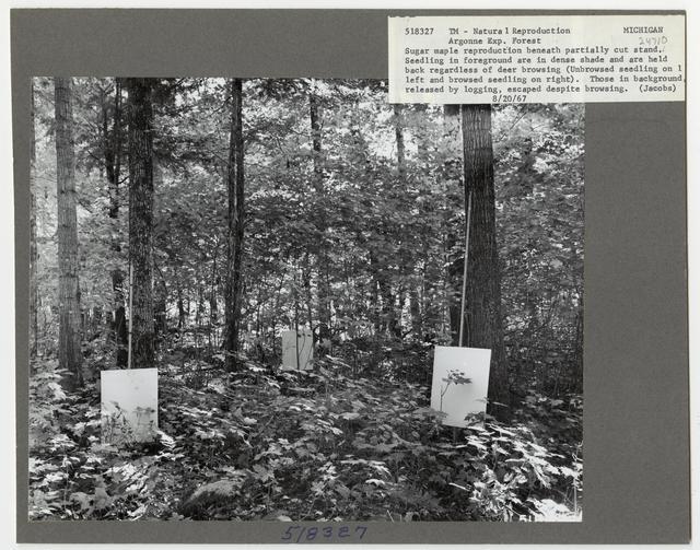 Reforestation - Michigan