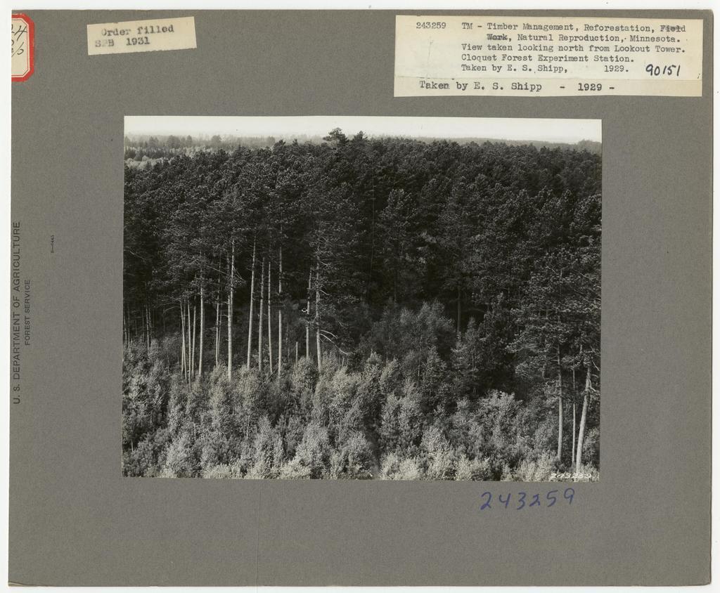Reforestation - Minnesota