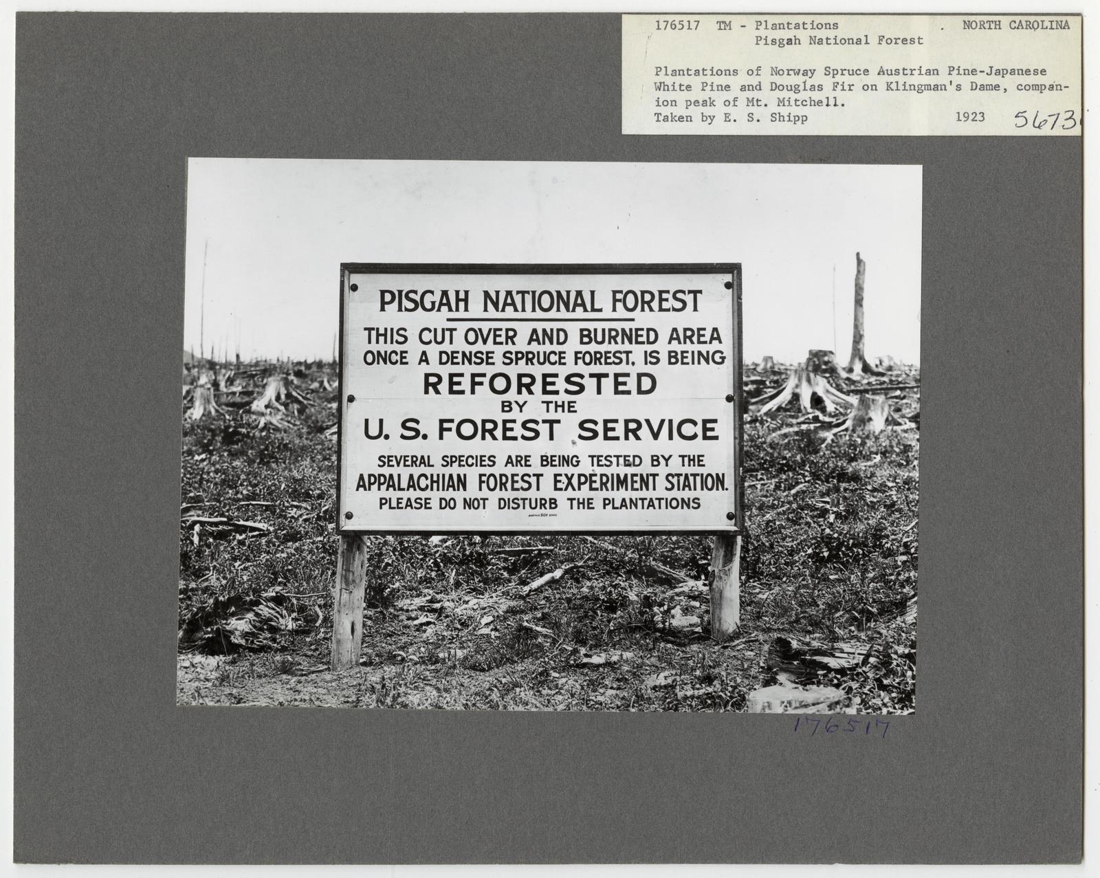 Reforestation - North Carolina