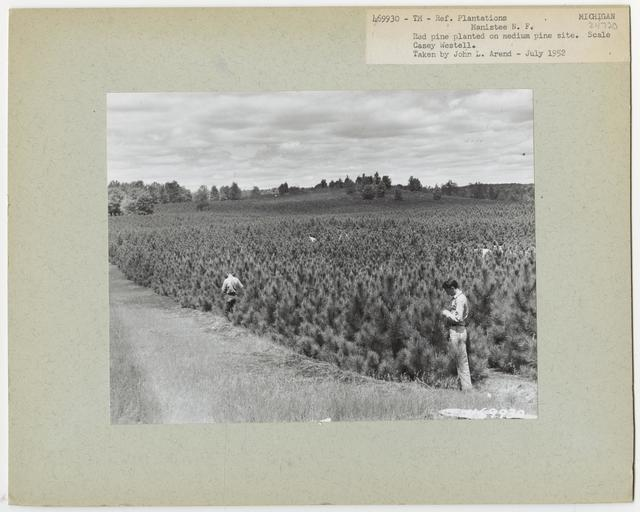 Reforestation: Plantations - Michigan
