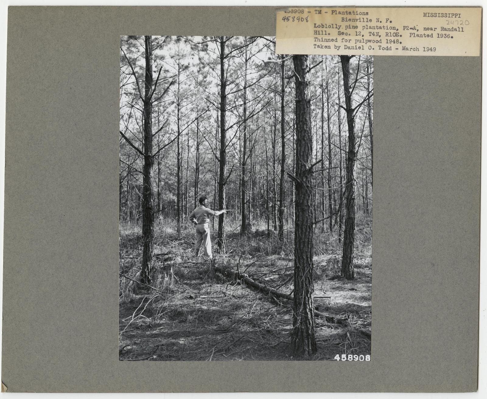 Reforestation: Plantations - Mississippi