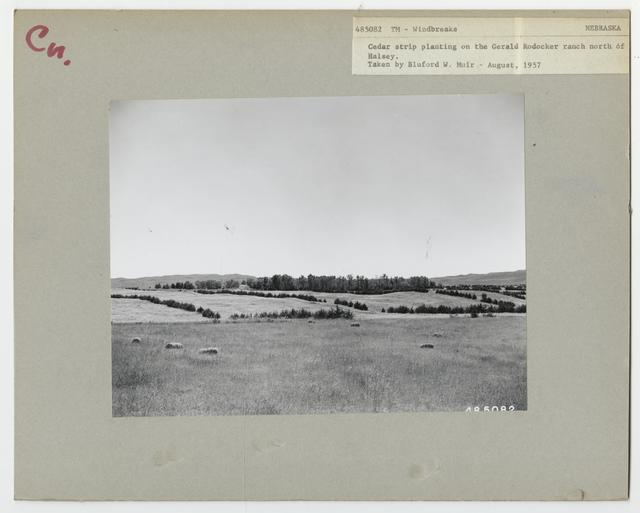 Shelterbelts: Windbreaks - Nebraska
