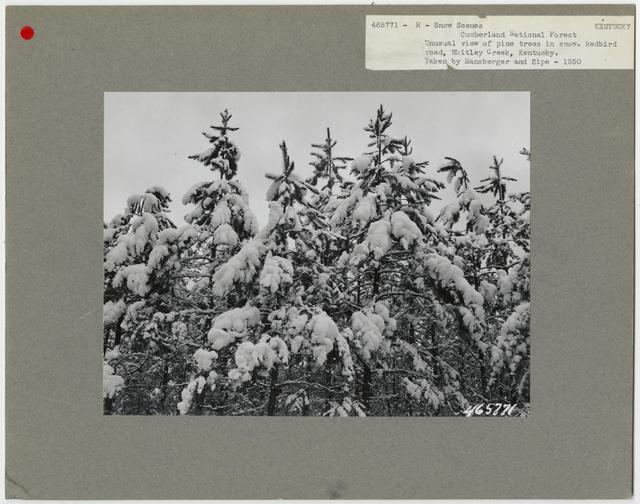 Snow Scenes - Kentucky