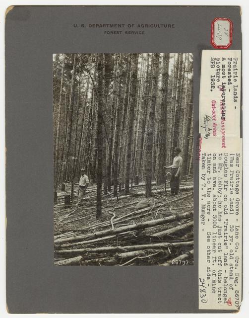 Thinning - Oregon