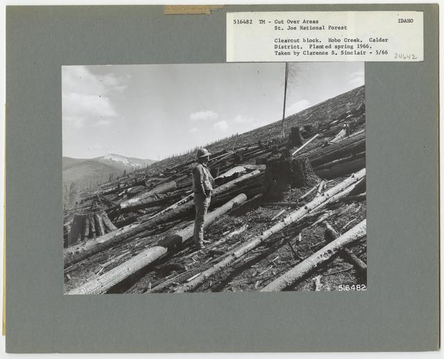 Timber Management - Cut -over Area - Idaho