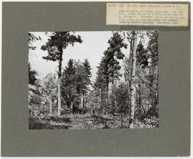 Timber Management - Cut -over Area - Michigan