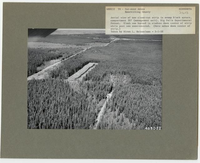 Timber Management - Cut -over Area - Minnesota