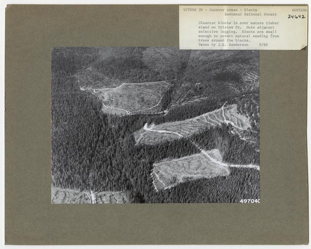 Timber Management - Cut -over Area - Montana