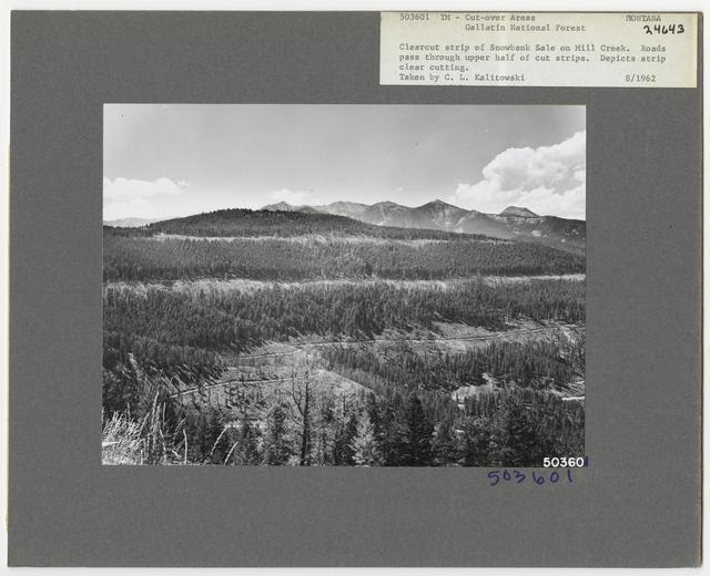 Timber Management - Cut -over Area - Montana