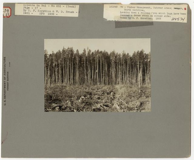 Timber Management - Cut -over Area - North Carolina