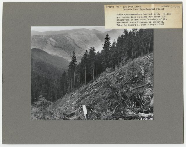 Timber Management - Cut -over Area - Oregon