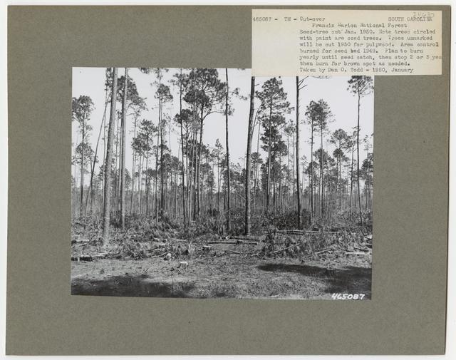Timber Management - Cut -over Area - South Carolina
