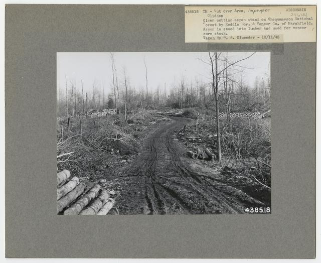 Timber Management - Cut -over Area - Wisconsin