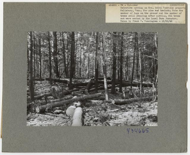 Timber Management - Partial Cutting - Connecticut