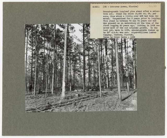Timber Management - Partial Cutting - Florida