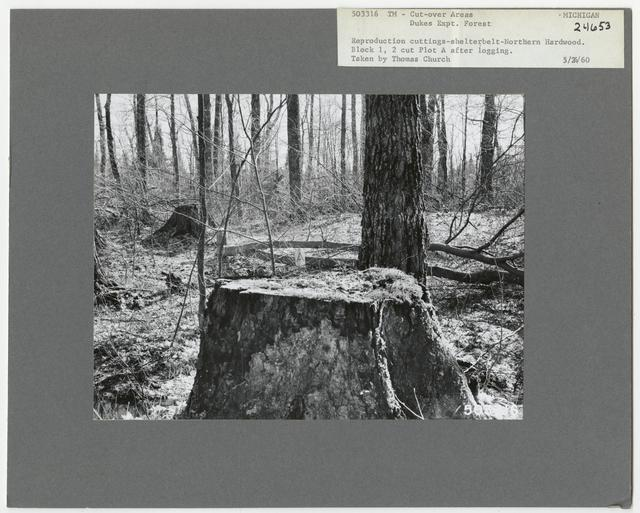 Timber Management - Partial Cutting - Michigan