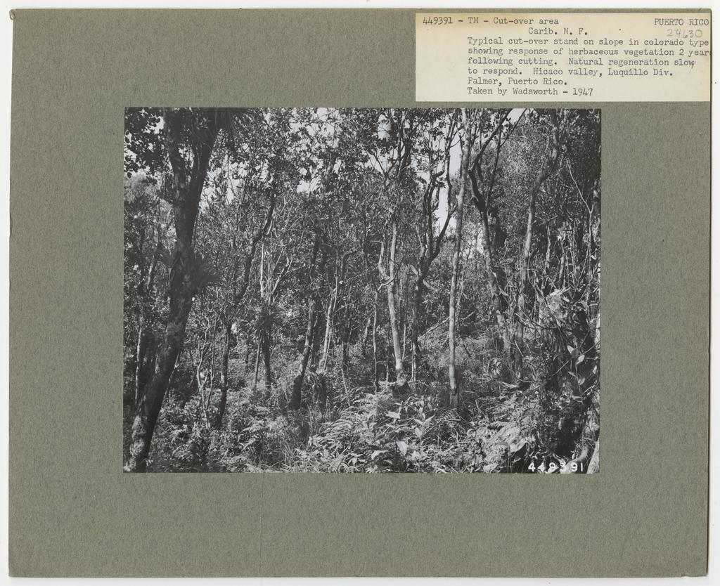 Timber Management - Partial Cutting - Puerto Rico