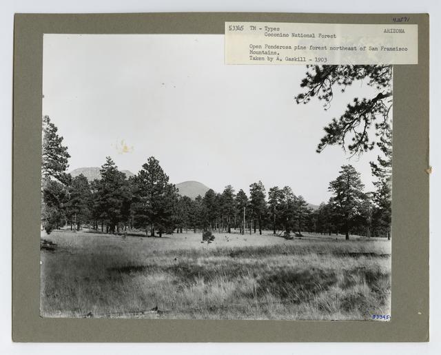 Timber Management: Types - Arizona