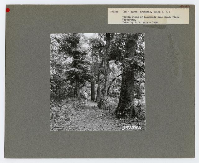 Timber Management: Types - Arkansas