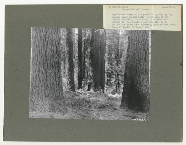 Timber Management: Types - California