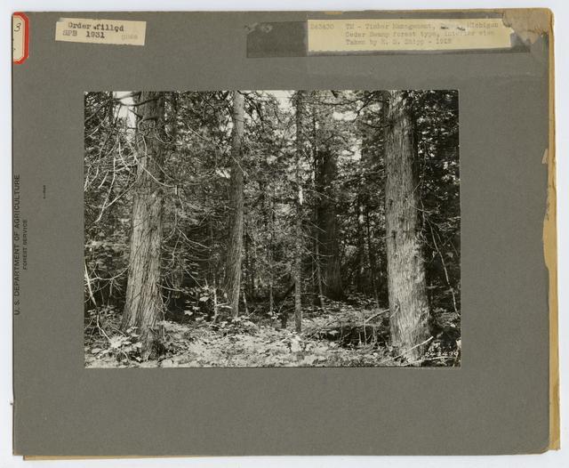 Timber Management: Types - Michigan