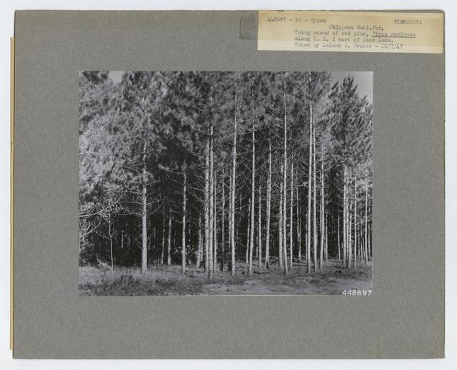 Timber Management: Types - Minnesota