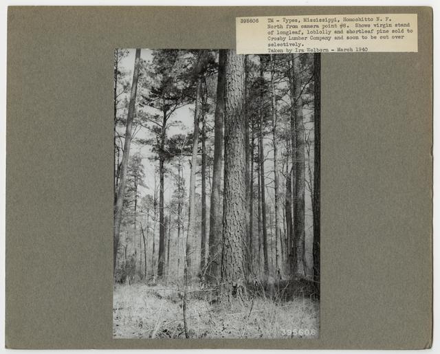 Timber Management: Types - Mississippi