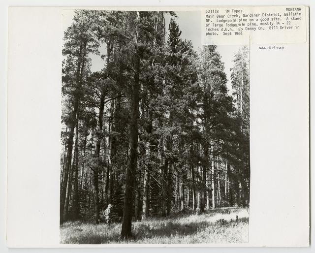 Timber Management: Types - Montana