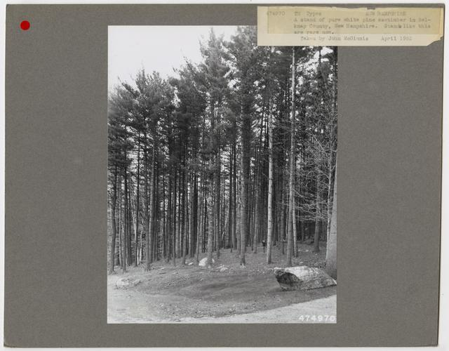 Timber Management: Types - New Hampshire