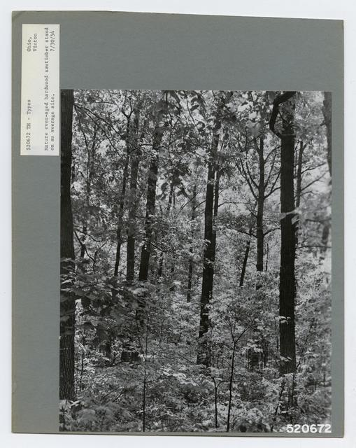 Timber Management: Types - Ohio