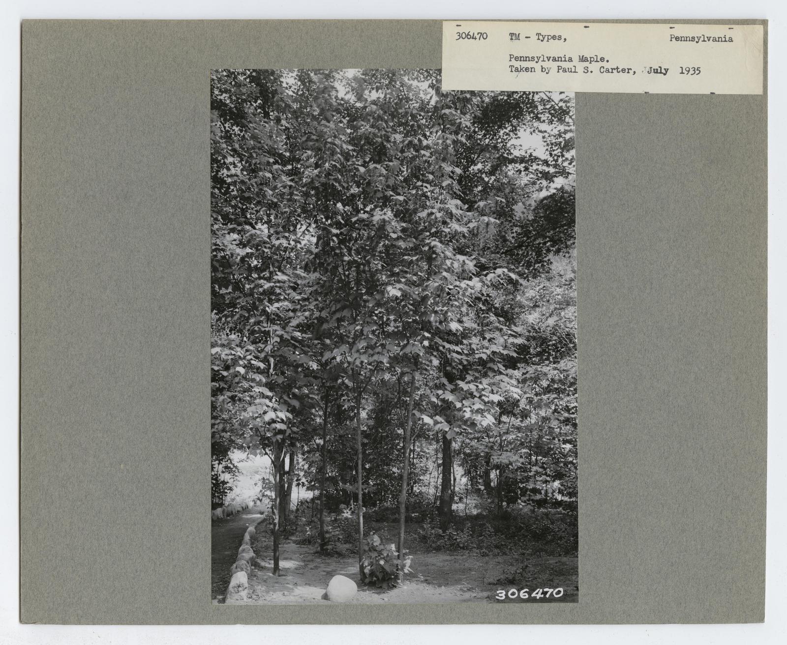 Timber Management: Types - Pennsylvania