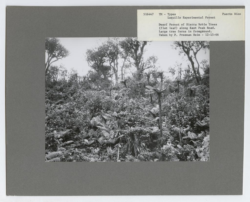 Timber Management: Types - Puerto Rico