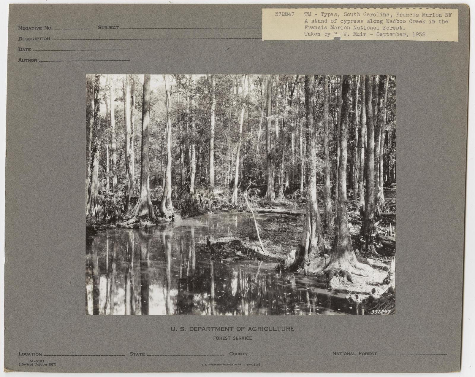 Timber Management: Types - South Carolina