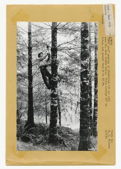 Timber Stand Improvement - Thinning