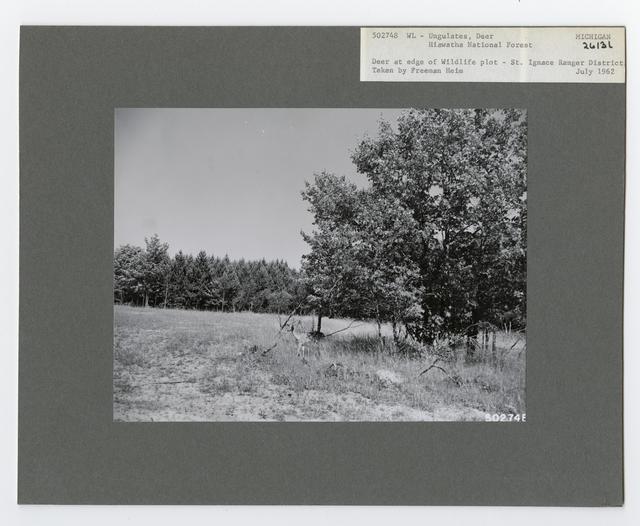 Ungulates: Deer - Michigan