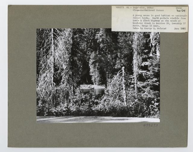 Ungulates: Deer - California - PICRYL