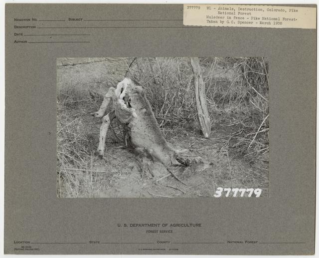 Wildlife Destruction - Colorado