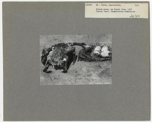 Wildlife Destruction - District of Columbia