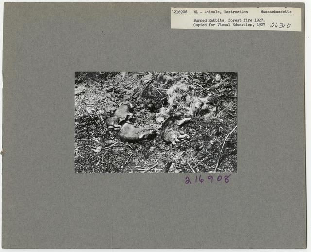 Wildlife Destruction - Massachusetts
