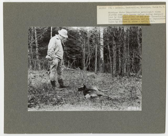 Wildlife Destruction - Michigan