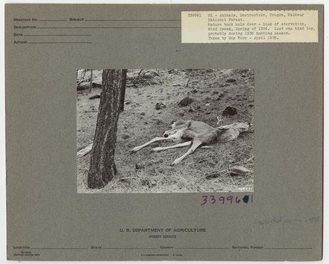 Wildlife Destruction - Oregon