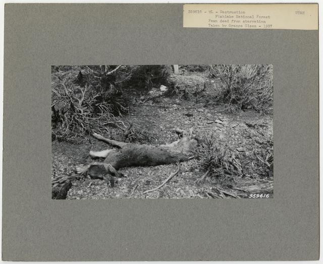 Wildlife Destruction - Utah
