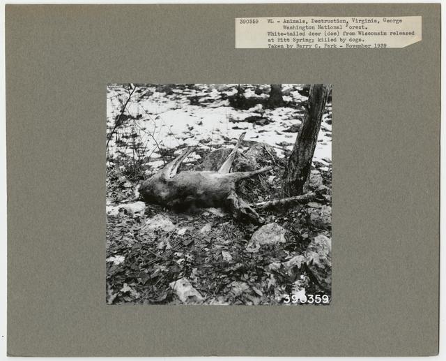 Wildlife Destruction - Virginia