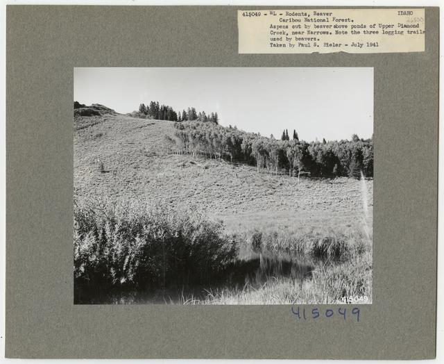 Wildlife Homes: Beaver Lodges - All States